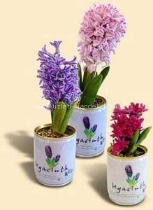 Emblemázott konzerv virágok