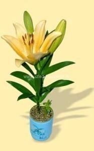 Logozótt egyedi konzerv virág