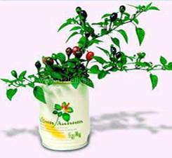 Logózott konzerv virágok zöldségek